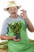Organic farmer with a achrysanthemums — Stock Photo
