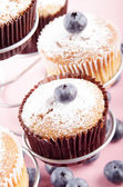 Blueberry cupcake with powdered sugar — Foto Stock