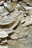 Fresh dried organic bay leaves — Stock Photo