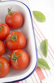 Freshly washed tomatoes in an enamel bowl — Stock Photo