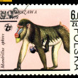Vintage  postage stamp. Mandrills. - Stock Photo