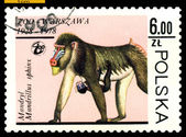 Vintage postage stamp. Mandrills. — Stock Photo