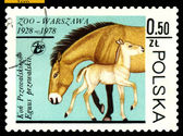 Vintage postage stamp. Przewalski Mare and colt. — Stock Photo