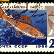 Vintage  postage stamp.  Baikal grayling. — Stock Photo