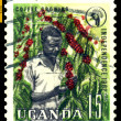Royalty-Free Stock Photo: Vintage  postage stamp. Coffee  Growing.