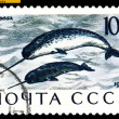 Vintage postage stamp. Narwhals. — Stock Photo