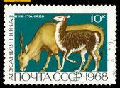 Vintage postage stamp. Eland and Guanaco. — Stock Photo