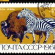 Vintage postage stamp. Bison and Zebra. — Stock Photo