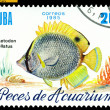 Vintage  postage stamp. Chaetodon ocellatus. — Stock Photo