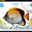 Vintage  postage stamp. Chaetodon sedentarius. — Stock Photo