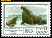 Vintage postage stamp. Walrus and calf. — Stock Photo
