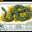 Vintage  postage stamp. Cottonmouth Ordinary. — Stock Photo