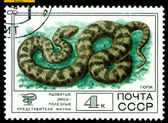 Vintage postage stamp. Viper. — Stock Photo