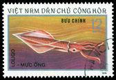 Vintage postage stamp. Squid Loligo. — Stock Photo