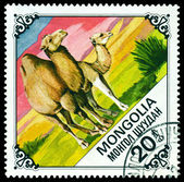 Vintage postage stamp. Camel and Calf. — Stock Photo