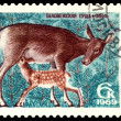 Vintage  postage stamp. Doe and fawn. — Stock Photo