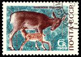 Vintage postzegel. doe en lichtgeel. — Stockfoto