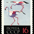 Vintage  postage stamp. Greater Flamingos. — Foto Stock