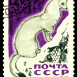 Vintage postage stamp. Ermine. — Stock Photo