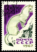 Vintage postage stamp. Ermine. — Stock Photo