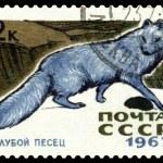 Vintage postage stamp. Arctic Blue Fox. — Stock Photo