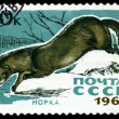 Vintage  postage stamp. Mink. — Stock Photo