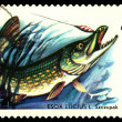 Vintage  postage stamp. Fish Pike. — Stock Photo