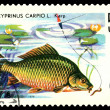 Stock Photo: Vintage postage stamp. Fish Carp.