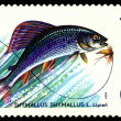 Stock Photo: Vintage postage stamp. Fish Grayling.