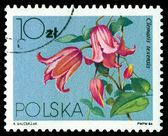 Vintage postage stamp. Flower Clematis Texensis. — Stock Photo
