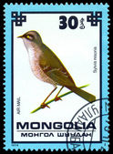 Vintage postage stamp. Hawk warbler. — Stock Photo