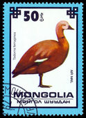 Vintage postage stamp. Ruddy shelduck. — Stockfoto