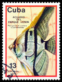 Vintage postage stamp. Pterophyllum scalare. — Stock Photo
