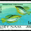 Stock Photo: Vintage  postage stamp. Trihopterus sumatranus.