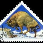 Vintage postage stamp. Europian Bison. — Stock Photo #42804981