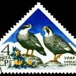 Vintage postage stamp. Caucasian snowcock. — Stock Photo