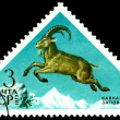 Vintage postage stamp. Ibex. — Stock Photo #42876151