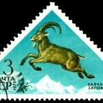 Vintage postage stamp. Ibex. — Stock Photo #42876151