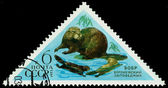Vintage  postage stamp. Beaver. — Stock Photo