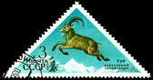Vintage  postage stamp. Ibex. — Stock Photo