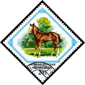 Vintage  postage stamp. Colt. — Stock Photo
