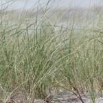 Texel beach Texel beach — Stock Photo #13473514