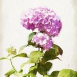 Постер, плакат: Watercolor pink hydrangea