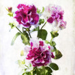 Stock Photo: Watercolored crimson petunia