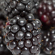 Macro Blackberry — Stock Photo