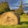 Golden Hay Bale — Stock Photo