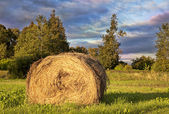 Golden Hay Bale in the countryside — Stock Photo