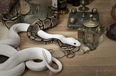 Two snakes with vintage objects — Stock Photo