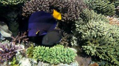 Fish in aquarium — Stock Video #23607179