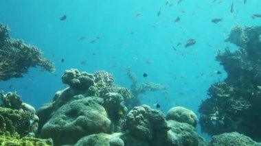 Underwater life of coral reef. Red Sea — Stock Video